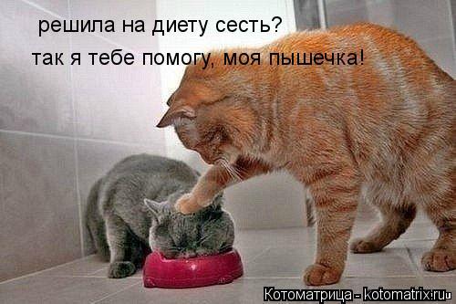 Котоматрица: решила на диету сесть? так я тебе помогу, моя пышечка!