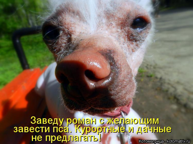 Котоматрица: Заведу роман с желающим завести пса. Курортные и дачные не предлагать!
