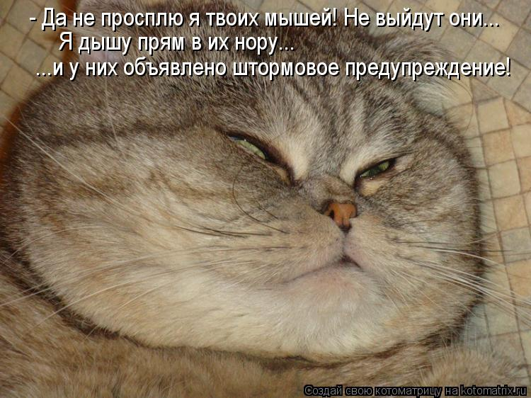 Котоматрица: - Да не просплю я твоих мышей! Не выйдут они...  Я дышу прям в их нору...  ...и у них объявлено штормовое предупреждение!