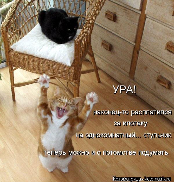 Котоматрица: УРА! наконец-то расплатился за ипотеку на однокомнатный... стульчик теперь можно и о потомстве подумать