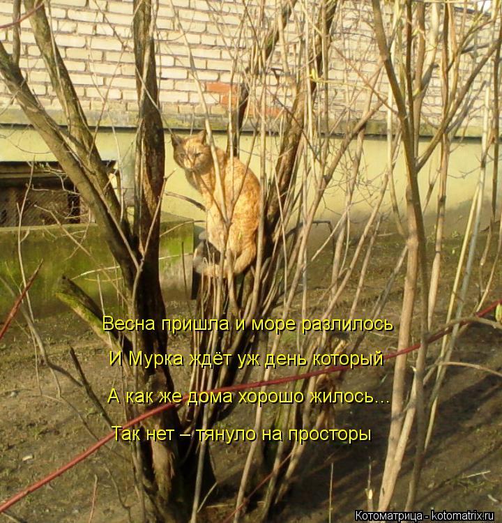 Котоматрица: Весна пришла и море разлилось И Мурка ждёт уж день который А как же дома хорошо жилось… Так нет – тянуло на просторы