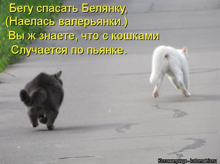 Котоматрица: Бегу спасать Белянку, (Наелась валерьянки.) Вы ж знаете, что с кошками Случается по пьянке.
