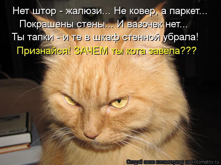 Котоматрица: Нет штор - жалюзи... Не ковер, а паркет... Покрашены стены... И вазочек нет... Ты тапки - и те в шкаф стенной убрала! Признайся! ЗАЧЕМ ты кота завела