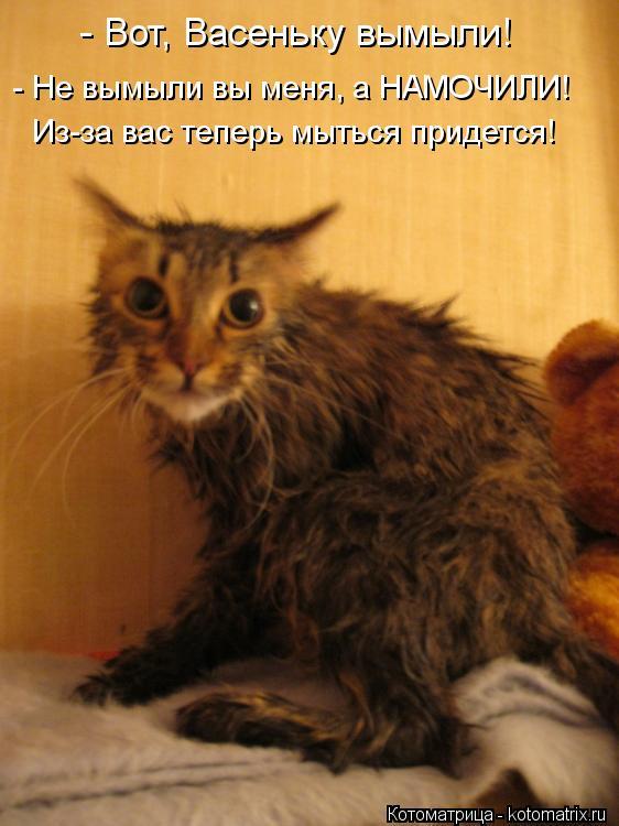 Котоматрица: - Вот, Васеньку вымыли! - Не вымыли вы меня, а НАМОЧИЛИ! Из-за вас теперь мыться придется!