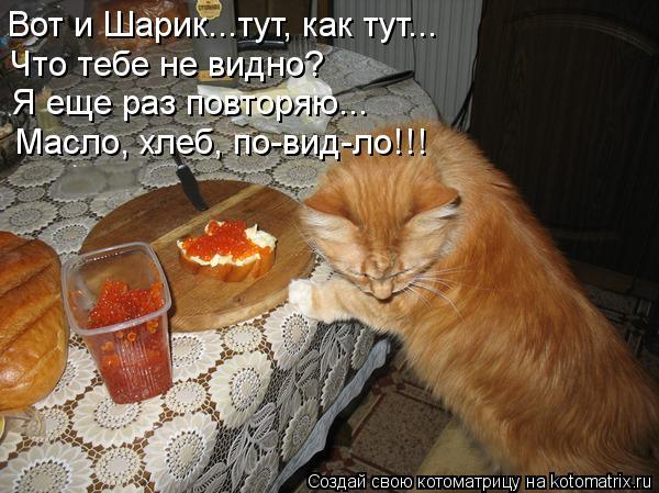 Котоматрица: Вот и Шарик...тут, как тут... Что тебе не видно? Я еще раз повторяю... Масло, хлеб, по-вид-ло!!!