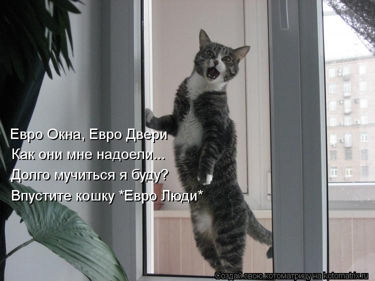 Котоматрица: Евро Окна, Евро Двери  Как они мне надоели... Долго мучиться я буду? Впустите кошку *Евро Люди*