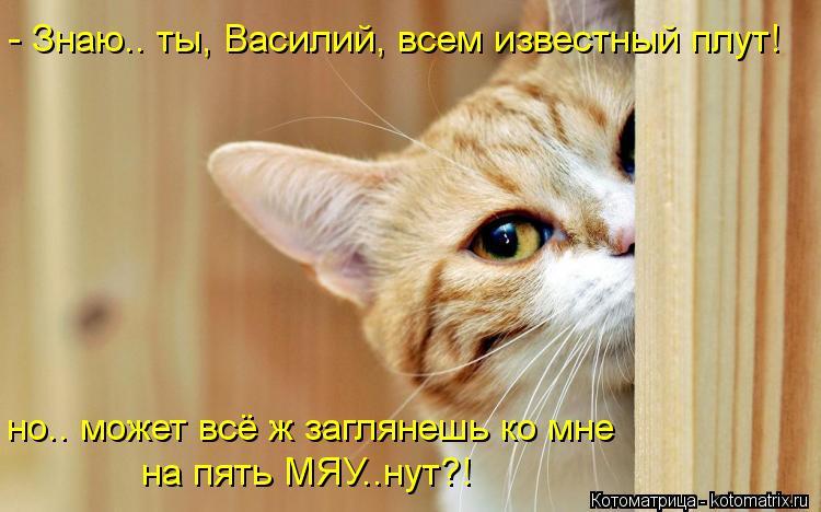 Котоматрица: - Знаю.. ты, Василий, всем известный плут! но.. может всё ж заглянешь ко мне на пять МЯУ..нут?!