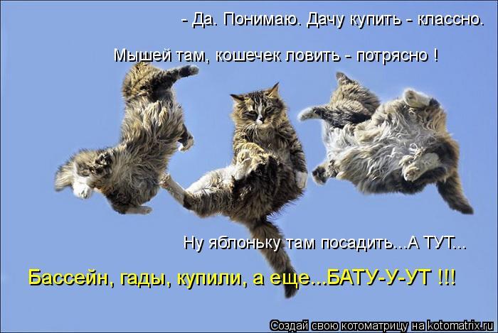 Котоматрица: - Да. Понимаю. Дачу купить - классно. Бассейн, гады, купили, а еще...БАТУ-У-УТ !!! Ну яблоньку там посадить...А ТУТ... Мышей там, кошечек ловить - потр