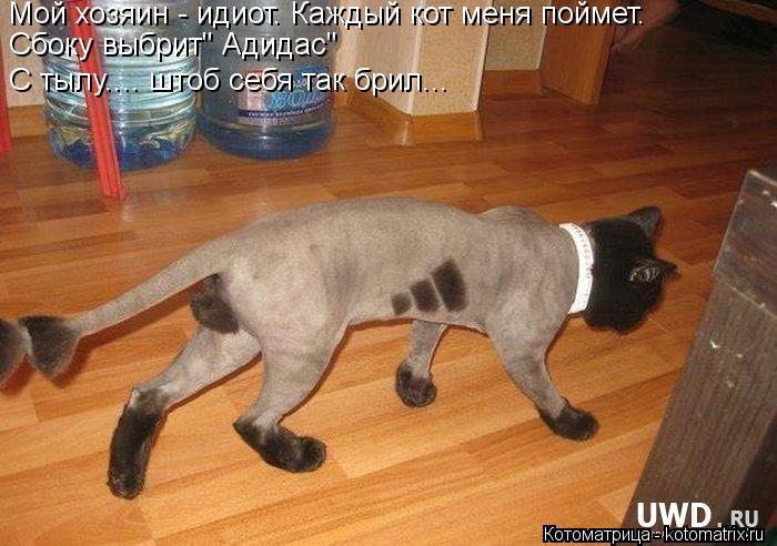 """Котоматрица: Мой хозяин - идиот. Каждый кот меня поймет. Сбоку выбрит"""" Адидас"""" С тылу.... штоб себя так брил..."""