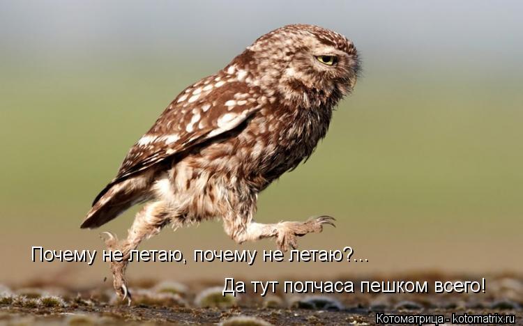 Котоматрица: Почему не летаю, почему не летаю?... Да тут полчаса пешком всего!