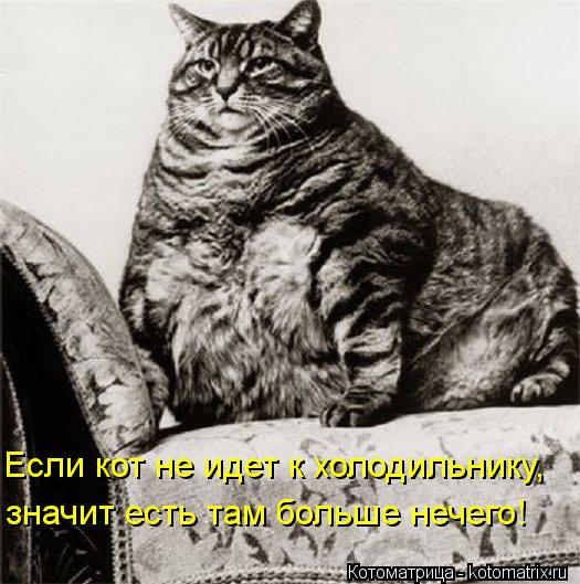 Котоматрица: значит есть там больше нечего! Если кот не идет к холодильнику,