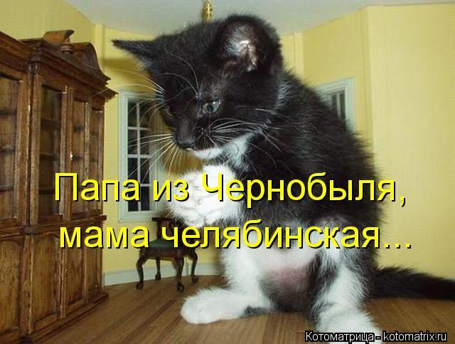 Котоматрица: Папа из Чернобыля, мама челябинская...