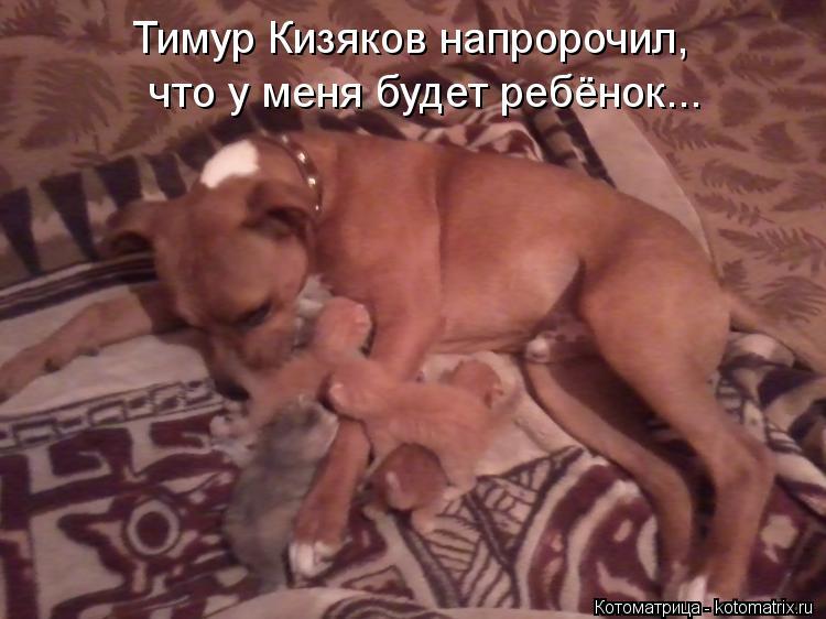 Котоматрица: Тимур Кизяков напророчил, что у меня будет ребёнок...