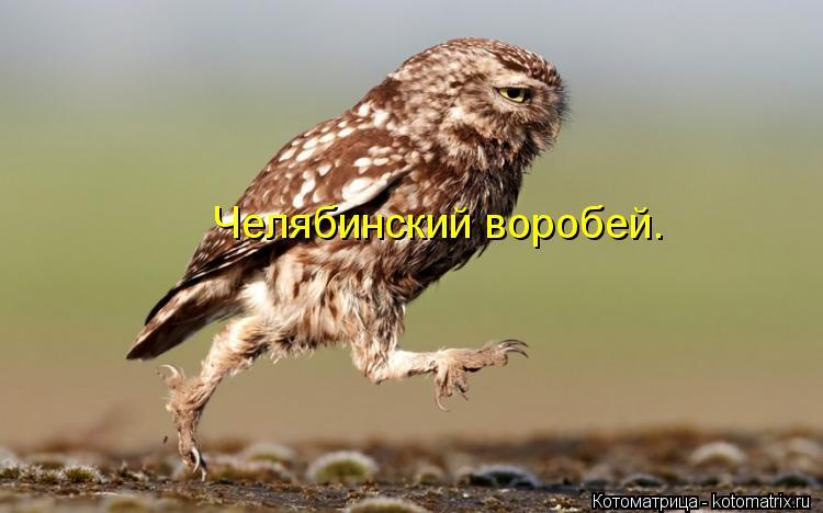 Котоматрица: Челябинский воробей.