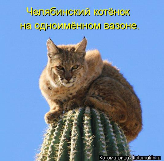 Котоматрица: Челябинский котёнок на одноимённом вазоне.