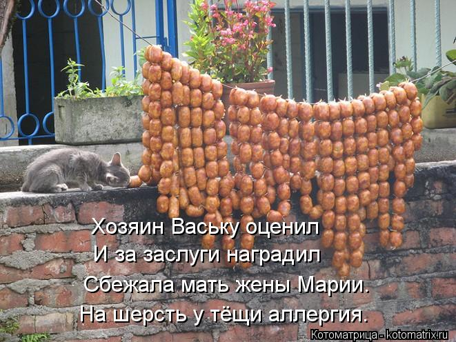 Котоматрица: Хозяин Ваську оценил И за заслуги наградил  Сбежала мать жены Марии. На шерсть у тёщи аллергия.