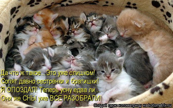 Котоматрица: Да что ж такое...Это уже слишком! Сопят давно сестрёнки и братишки! Я ОПОЗДАЛ! Теперь усну едва ли... Они же СНЫ уже ВСЕ РАЗОБРАЛИ!