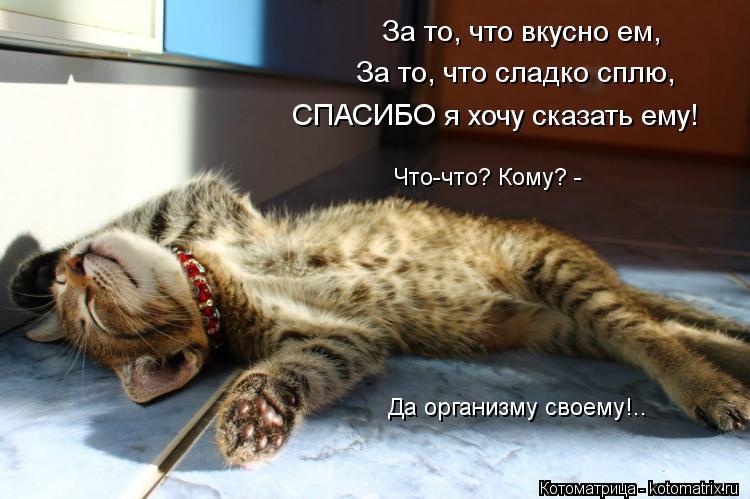 Котоматрица: За то, что вкусно ем,  За то, что сладко сплю, СПАСИБО я хочу сказать ему!  Да организму своему!.. Что-что? Кому? -