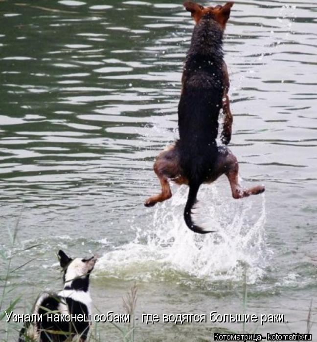 Котоматрица: Узнали наконец собаки - где водятся большие раки.