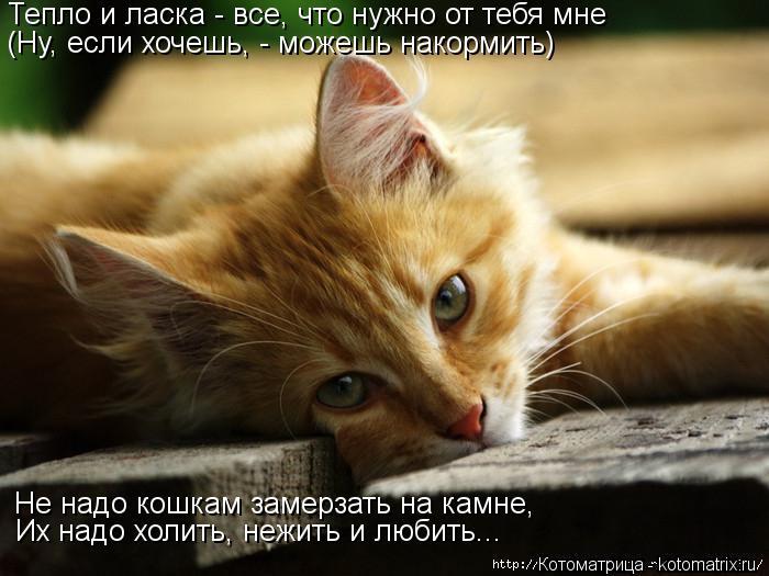 Котоматрица: Тепло и ласка - все, что нужно от тебя мне (Ну, если хочешь, - можешь накормить) Не надо кошкам замерзать на камне, Их надо холить, нежить и люби