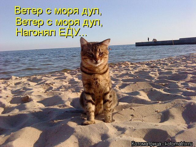 Котоматрица: Ветер с моря дул, Ветер с моря дул, Нагонял ЕДУ...