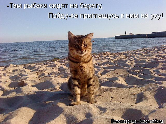 Котоматрица: -Там рыбаки сидят на берегу, Пойду-ка приглашусь к ним на уху!