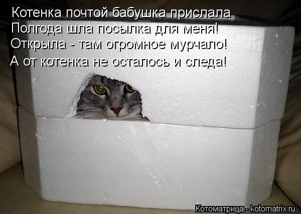 Котоматрица: Котенка почтой бабушка прислала Полгода шла посылка для меня! Открыла - там огромное мурчало! А от котенка не осталось и следа!