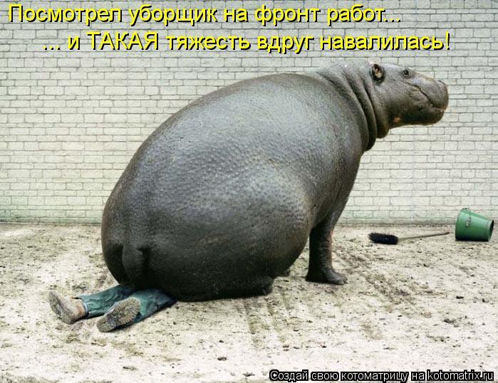 Котоматрица: Посмотрел уборщик на фронт работ... ... и ТАКАЯ тяжесть вдруг навалилась!