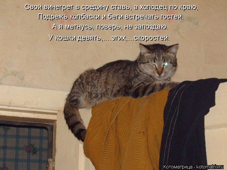 Котоматрица: Свой винегрет в средину ставь, а холодец по краю, Подрежь колбаски и беги встречать гостей. А я метнусь, поверь, не запоздаю. У кошки девять,...