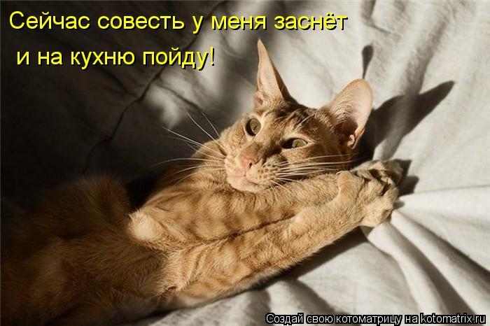 Котоматрица: Сейчас совесть у меня заснёт и на кухню пойду!