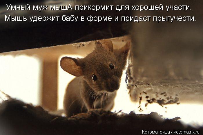 Котоматрица: Умный муж мышА прикормит для хорошей участи. Мышь удержит бабу в форме и придаст прыгучести.