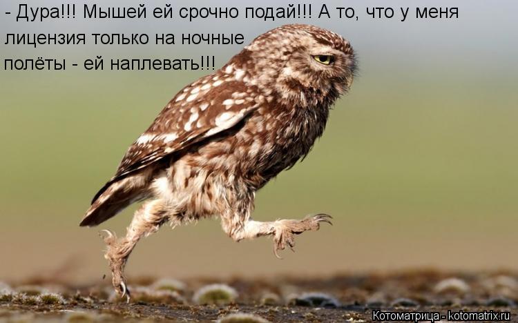 Котоматрица: - Дура!!! Мышей ей срочно подай!!! А то, что у меня лицензия только на ночные полёты - ей наплевать!!!