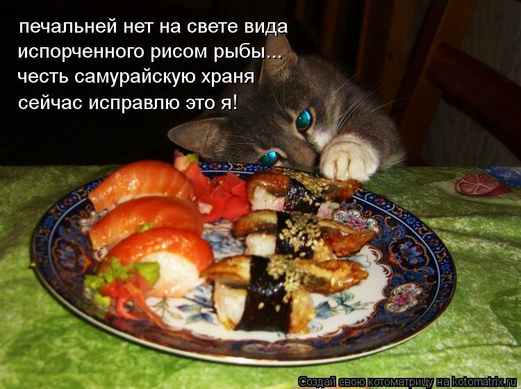Котоматрица: печальней нет на свете вида испорченного рисом рыбы... честь самурайскую храня сейчас исправлю это я!