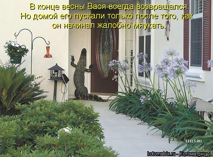 Котоматрица: В конце весны Вася всегда возвращался. Но домой его пускали только после того, как он начинал жалобно мяукать.