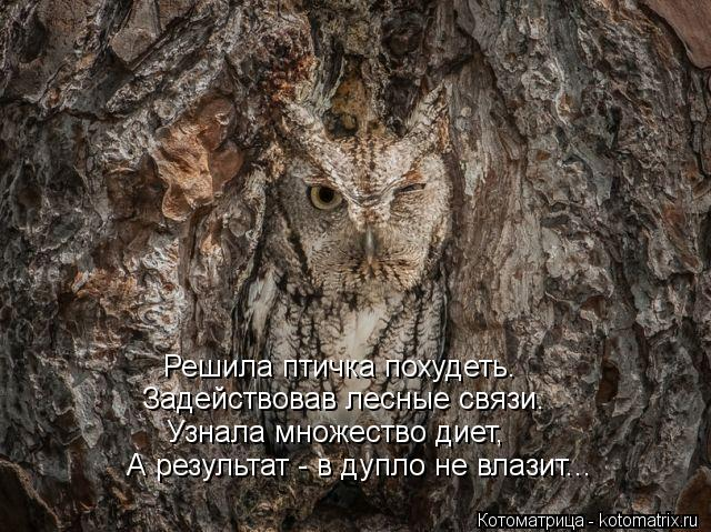 Котоматрица: Решила птичка похудеть. Задействовав лесные связи. Узнала множество диет, А результат - в дупло не влазит...