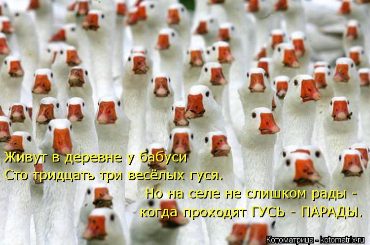 Котоматрица: Живут в деревне у бабуси Сто тридцать три весёлых гуся. Но на селе не слишком рады - когда проходят ГУСЬ - ПАРАДЫ.