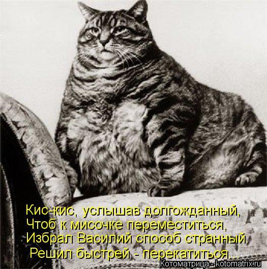 Котоматрица: Кис-кис, услышав долгожданный, Чтоб к мисочке переместиться, Избрал Василий способ странный. Решил быстрей - перекатиться...