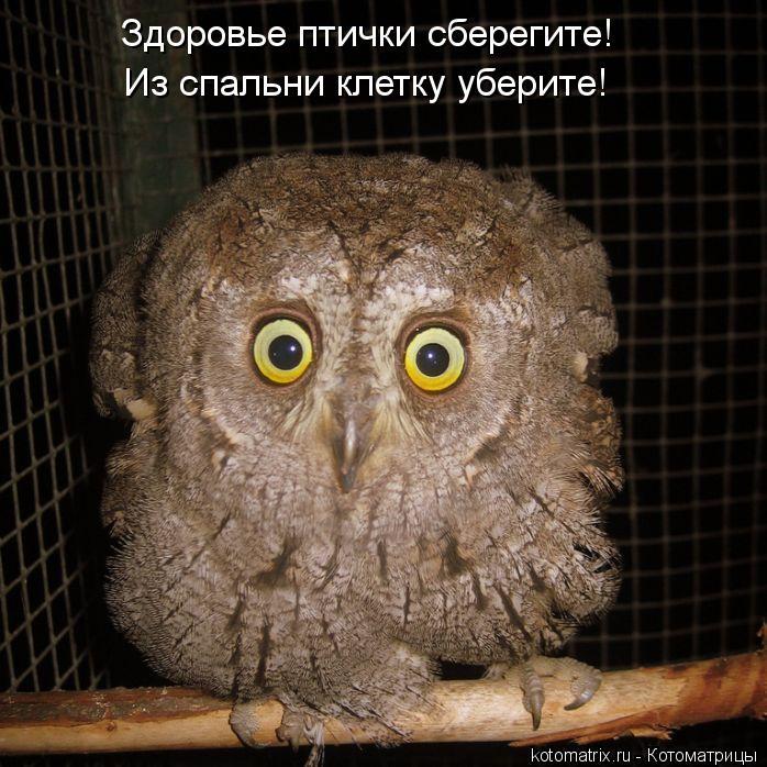 Котоматрица: Здоровье птички сберегите! Из спальни клетку уберите!
