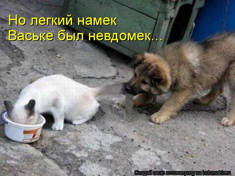 Котоматрица: Но легкий намек Ваське был невдомек...