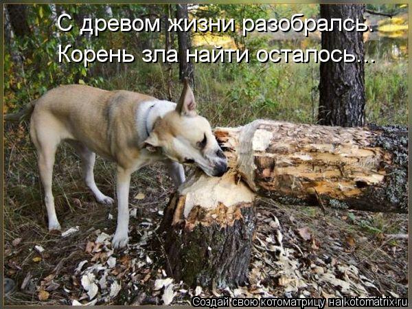 Котоматрица: С древом жизни разобралсь. Корень зла найти осталось...