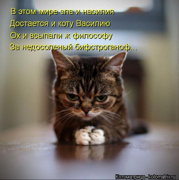 Котоматрица: В этом мире зла и насилия Достается и коту Василию Ох и всыпали ж философу За недосоленый бифстроганоф...