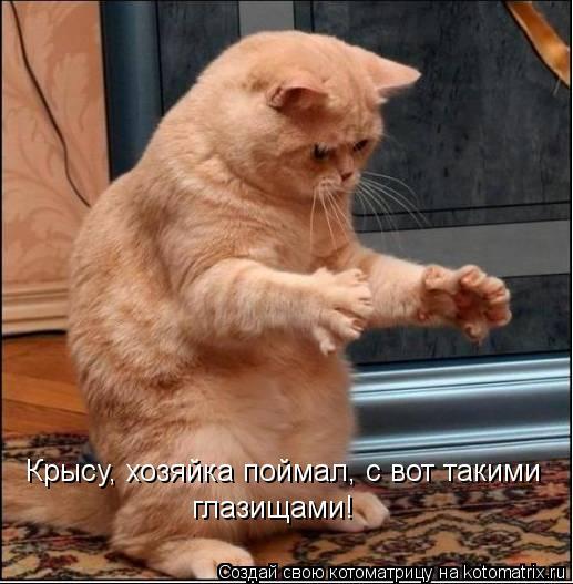 Котоматрица: Крысу, хозяйка поймал, с вот такими глазищами!