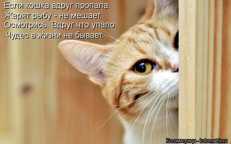 Котоматрица: Если кошка вдруг пропала. Осмотрись. Вдруг что упало. Жарят рыбу - не мешает. Чудес в жизни не бывает.