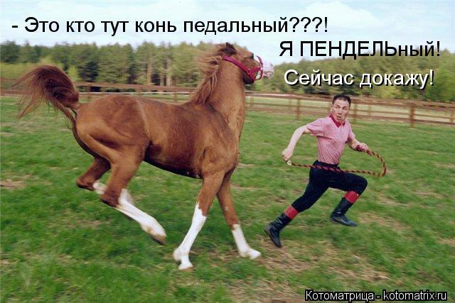 Котоматрица: - Это кто тут конь педальный???! Я ПЕНДЕЛЬный!  Сейчас докажу!