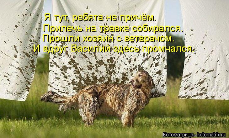 Котоматрица: И вдруг Василий здесь промчался. Прошли хозяин с ветврачом. Прилечь на травке собирался. Я тут, ребята не причём.