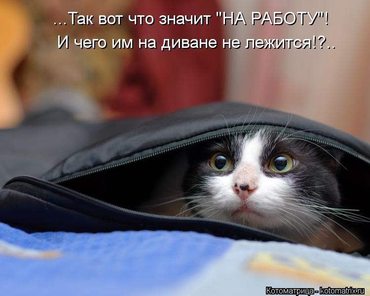 """Котоматрица: ...Так вот что значит """"НА РАБОТУ""""! И чего им на диване не лежится!?.."""