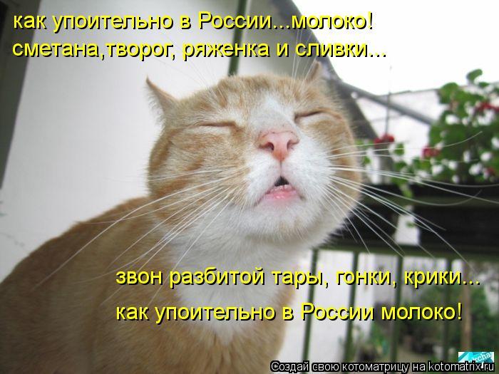 Котоматрица: как упоительно в России...молоко! сметана,творог, ряженка и сливки... звон разбитой тары, гонки, крики... как упоительно в России молоко!