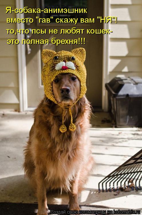 """Котоматрица: Я-собака-анимэшник вместо """"гав"""" скажу вам """"НЯ""""! то,что псы не любят кошек- это полная брехня!!!"""