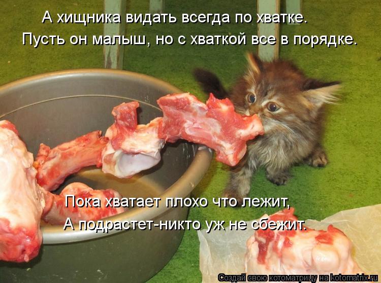 Котоматрица: А хищника видать всегда по хватке. Пусть он малыш, но с хваткой все в порядке. Пока хватает плохо что лежит, А подрастет-никто уж не сбежит.