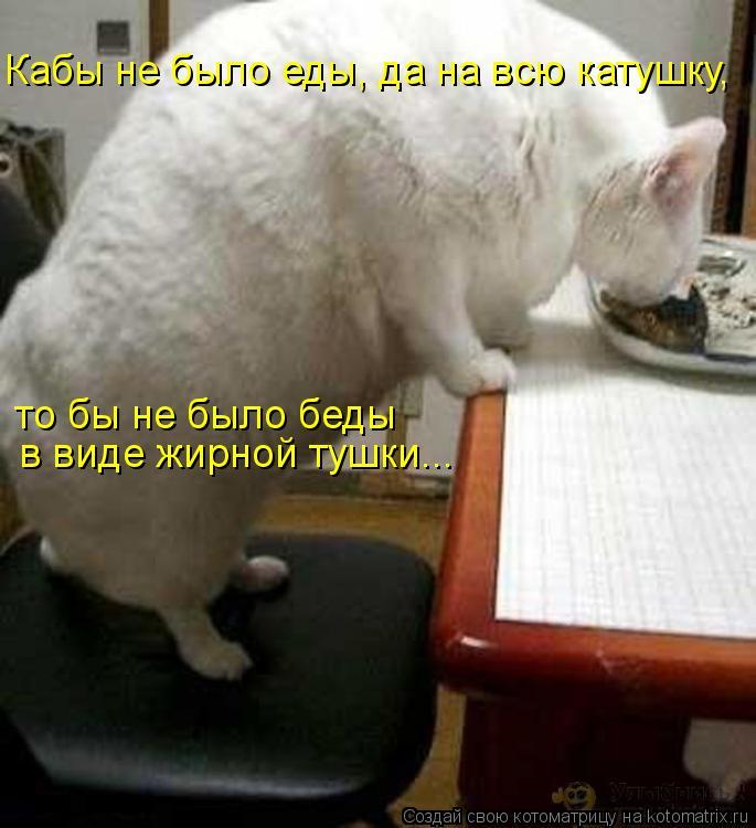 Котоматрица: Кабы не было еды, да на всю катушку,  то бы не было беды в виде жирной тушки...